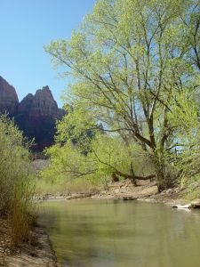 Zion Canyon - vortex of compassion, fueled by the Virgin River, shown here with the first new greens of Spring