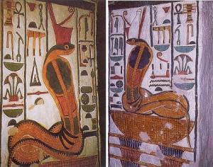 egyptcobra
