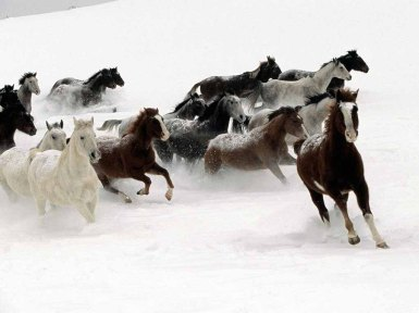 Wild Horses Running in Snow (clickthrough for source)